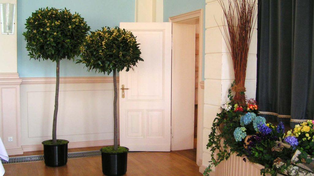 Mietpflanzen: Blühende Bäumchen für eine Veranstaltung
